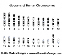 Human chromosome idiograms, diagrams