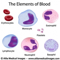 Elements of blood, medical drawing.