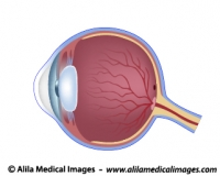 List of synonyms and antonyms of the word human eye diagram unlabeled label the eye purposegames ccuart Images