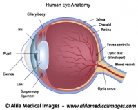 Eye anatomy labeled diagram.